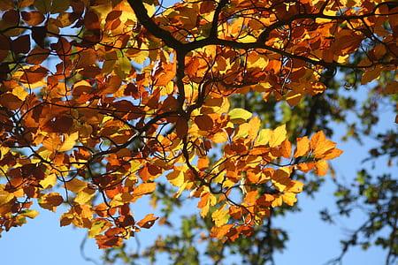 orange leaves close-up photo