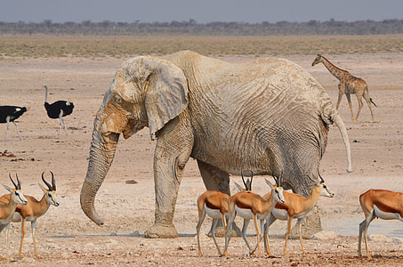 gray elephant surrounded by deer, giraffe, and ostrich during daytime