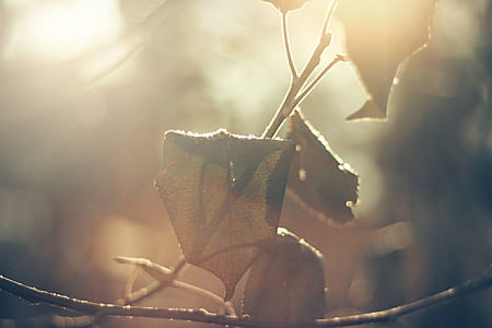photo of brown dried leaf