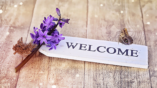 owl butterfly on welcome text signboard