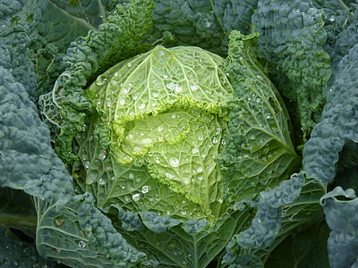 close-up photography of green Chinese cabbage
