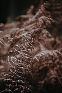 fern, leaf, plant, woodland, forest