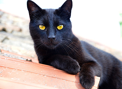 yellow-eyed black cat