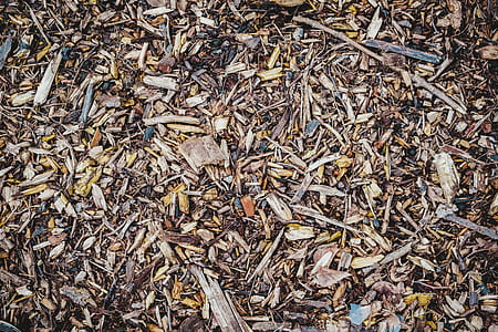 high angle photo of dry leaves