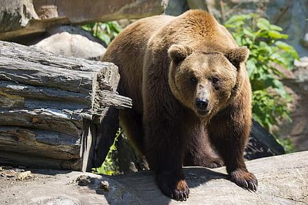 brown bear standing near tree log
