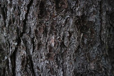 bark, tree, dark, pinetree, pine