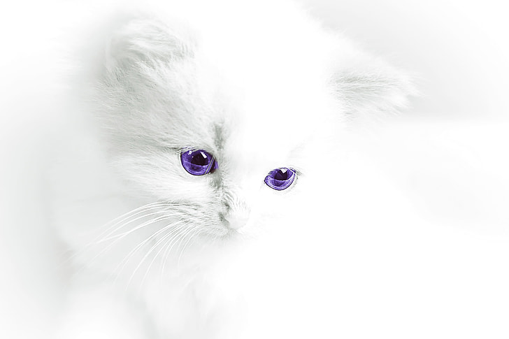 white car with purple eye