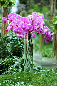 pink orchids on glass vase