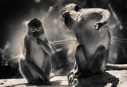 grayscale photography of two monkey