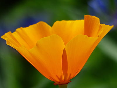 focused photo of yellow flower