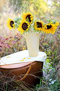 yellow sunflowers in yellow vase on brown wicker picnic basket