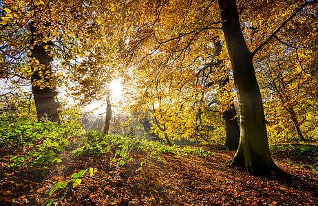 sun rays on yellow leaf tree
