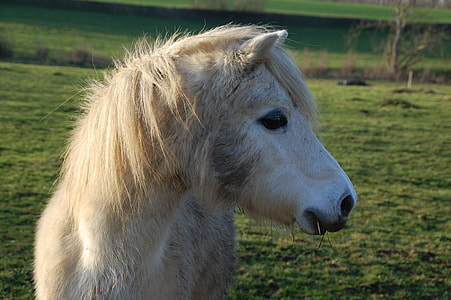 close-up photography of brown horse