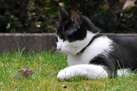tuxedo cat laying on green grass