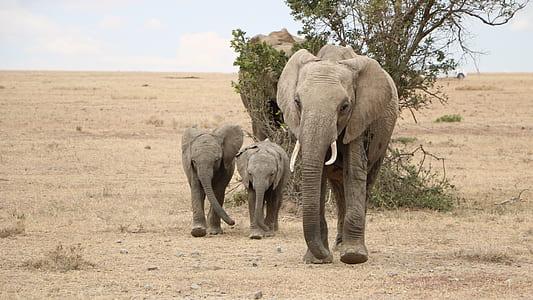 three brown elephant walking beside tree