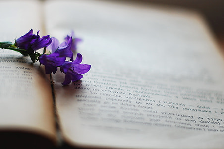 purple flowers on book