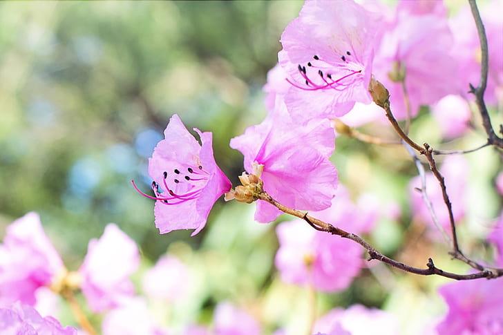 purple and white petal flowers