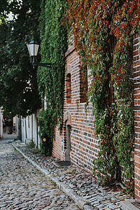 Old building covered in vine