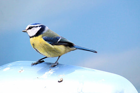 yellow, white, black, and blue bird on white surface