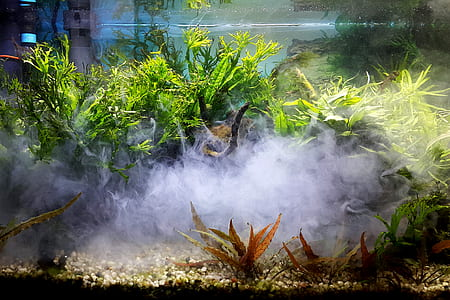 Green Leaf Plants With Smoke