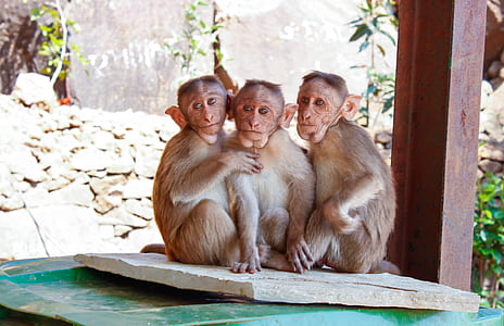 three monkeys sitting next to each others