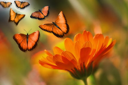 shallow focus on orange flower with butterflies