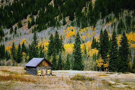 shack near pine trees graphic wallpaper
