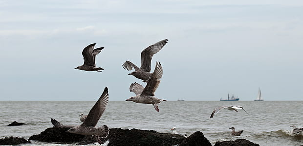 photo of flying seagulls near body water