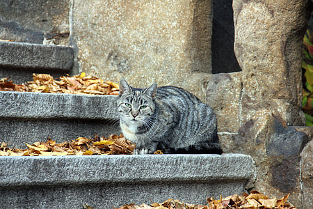 silver tabby cat near white wall