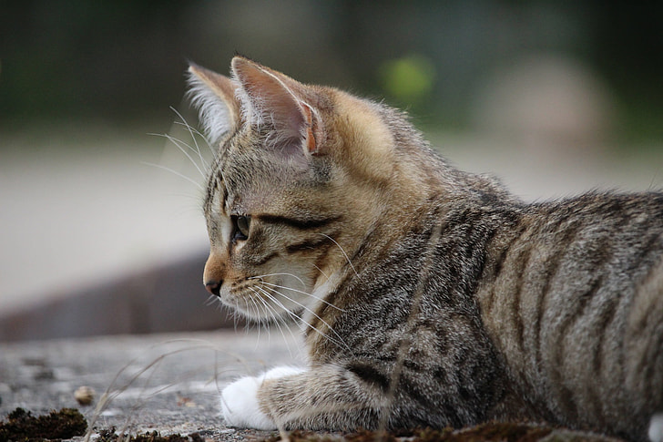 selective focus photography of short-furred brown and grey tabby kitten