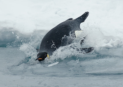 photo of penguin near body of water