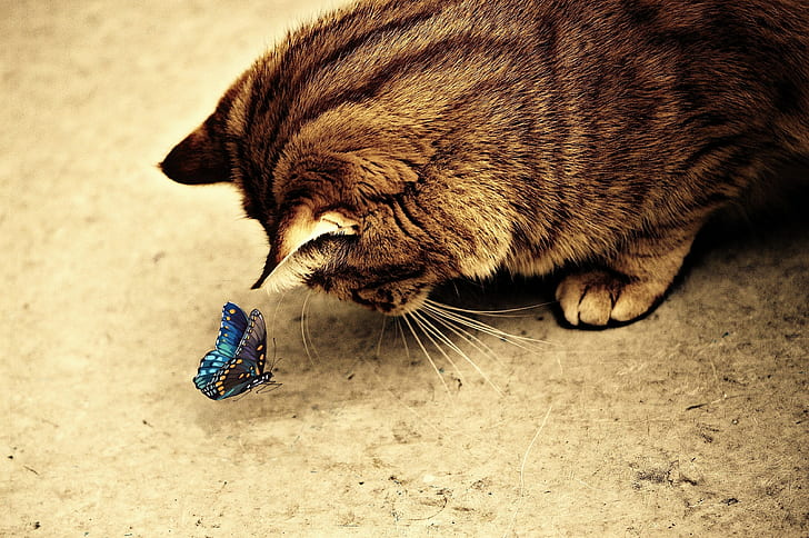 brown tabby cat looking at blue butterfly