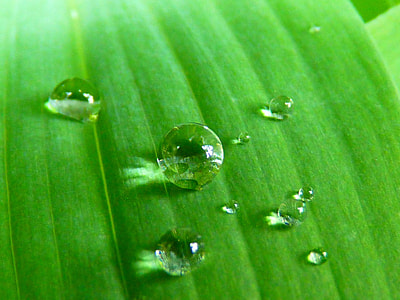 raindrops on green leaf
