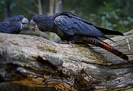 black bird giving its food to another bird