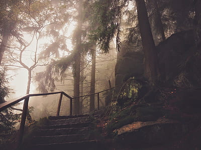 gray concrete stairs surrounded by fogs and pine trees