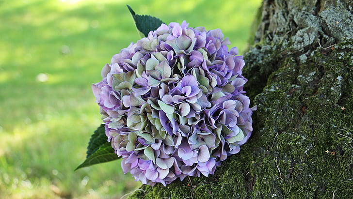 purple and green flowers on tree trunk