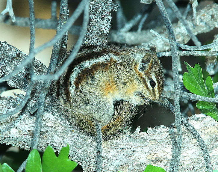 Brown Squirrel on Tree Trunk