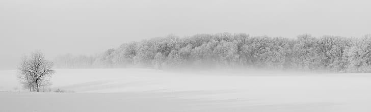 Winter Forest Illustration