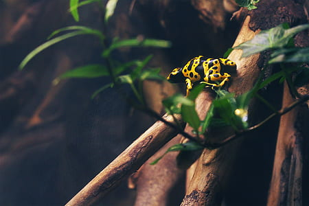 photographed of yellow and black animal on brown branch
