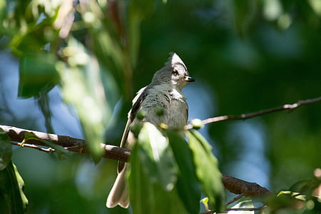 gray and white bird perched on tree
