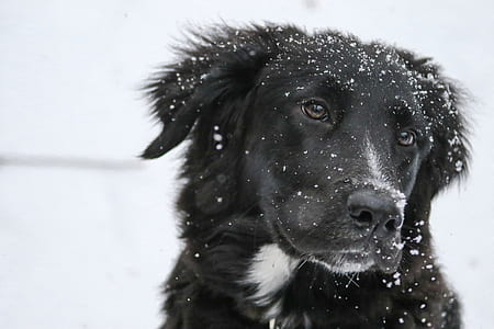 photography of black and white border collie