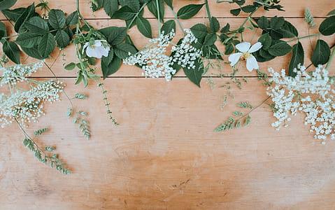 white petal flower on brown wooden parquet