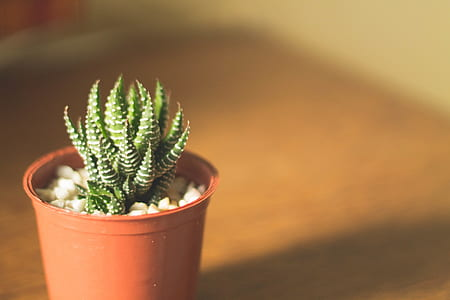 selective focus photography of succulent plant with pot