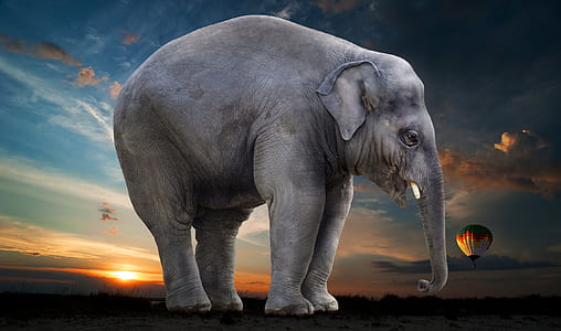 grey elephant stands on green grass field under blue sky
