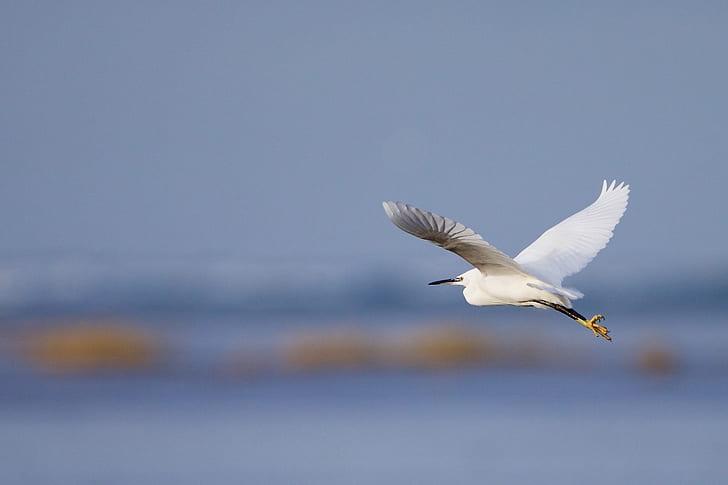 little egret flying under blue sky during daytime