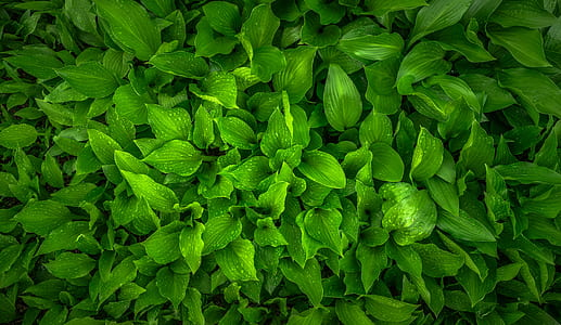 green leaf plant in closeup photography