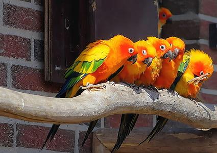 five orange-and-green birds