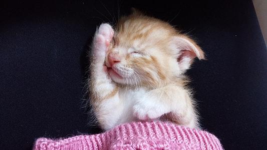 tabby kitten inside crochet textile