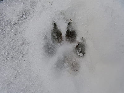 dog paw print on snow during daytime