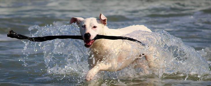 short-coated white dog running on ocean shore during daytime